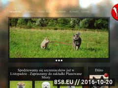 Miniaturka domeny www.akitajaponska.pl