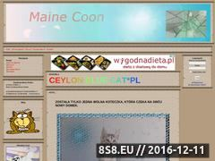 Miniaturka Hodowla kotów rasy Maine Coon (arash.aaf.pl)