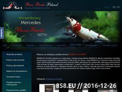 Miniaturka domeny www.benibachi.pl