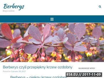 Zrzut strony Blog o berberysie