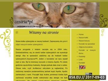 Zrzut strony Cezaria*PL - hodowla kotów syberyjskich, kot syberyjski, koty syberyjskie
