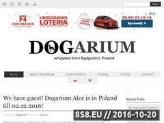 Miniaturka domeny dogarium.pl