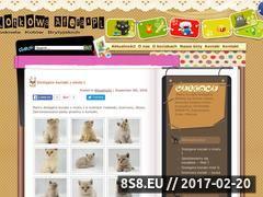 Miniaturka domeny www.kotkowaafera.pl