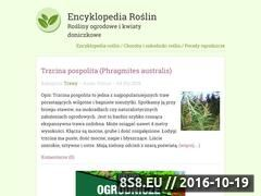 Miniaturka domeny kwiaty-ogrody.pl