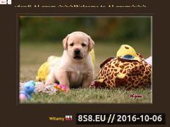 Miniaturka domeny labrador.az.pl