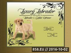 Miniaturka domeny www.luxurylabrador.pl