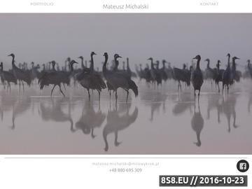 Zrzut strony Mateusz Michalski - fotografia zwierząt