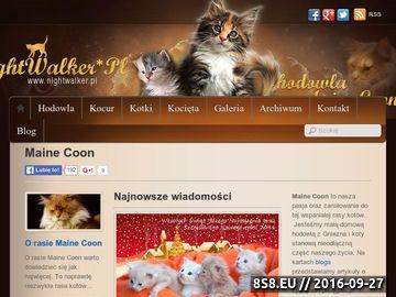 Zrzut strony Oferujemy kocięta rasow Maine Coon z rodowodem