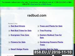 Miniaturka domeny www.radbud.com