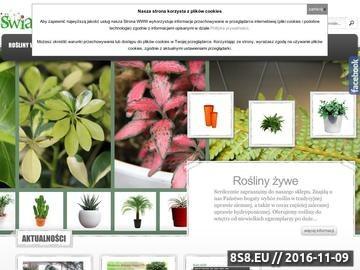 Zrzut strony Kwiaciarnia Kraków - Świat Roślin