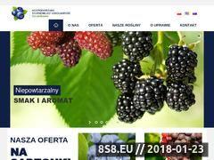 Miniaturka borowka.com.pl (Oferta szkółki borówki, sadzonki i produkcja)