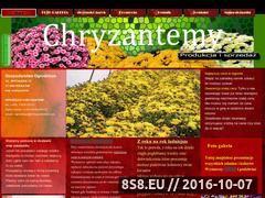 Miniaturka domeny www.chryzantemki.com