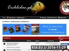 Miniaturka cichlidae.pl (Forum o pielęgnicach)