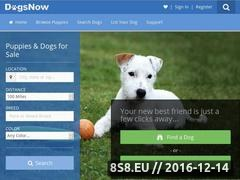 Dogs Now Website