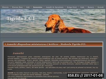Zrzut strony Jamniki długowłose. Hodowla Tigrida FCI.