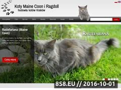 Miniaturka domeny koty-ragdoll.com