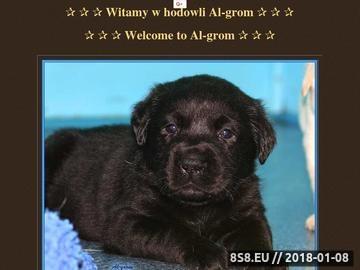 Zrzut strony Al-grom Labrador Retriever hodowla