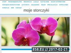 Miniaturka domeny www.mojestorczyki.pl