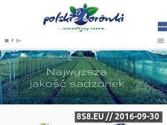 Miniaturka domeny polskieborowki.pl