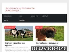 Miniaturka domeny www.psiaki.net.pl