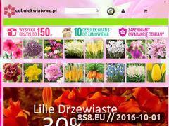 Miniaturka domeny sklep.cebulekwiatowe.pl