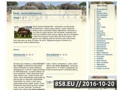 Miniaturka domeny slonie24.com