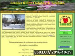 Miniaturka domeny szkolkagrubsko.com