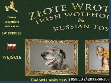 Zrzut strony Hodowla Zlote Wrota - Wilczarz Irlandzki i Rosyjski Toy